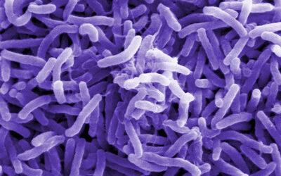 ERC fördert Projekt zur Entwicklung eines Detektionsverfahrens für Cholera-Erreger