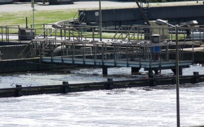 Skilled labor: water and waste company imports bugs to treat waste water