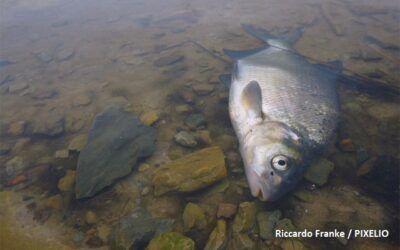 Aquatic Pollutants Call: about 24 M€ for transnational research projects