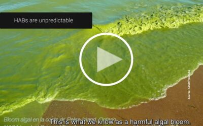 Technology aims to avoid the impact of algal bloom on desalination plants