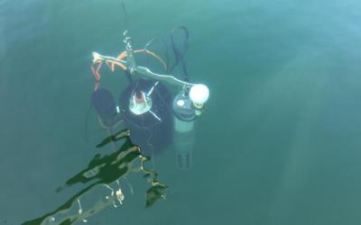 Corona: Weltweites Gewässer-Experiment zum Mitmachen