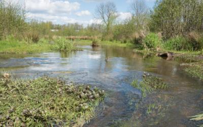 UDE entwickelt Diagnosewerkzeug zur Gewässerqualität