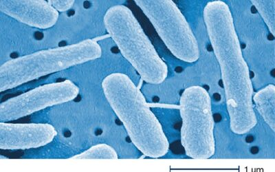 Chemische Desinfektion: den Teufel mit Beelzebub austreiben?