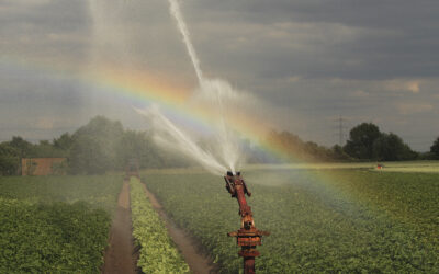 Agricultural water misuse harms global food supply