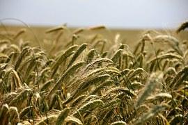 Recht: Neues Meldeverfahren für auffällige Pflanzenschutzmittel