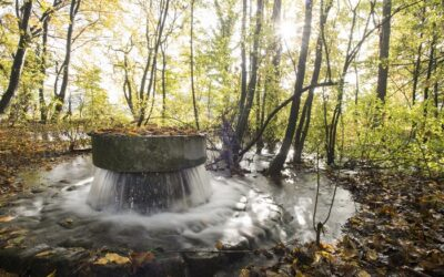 Water management inspired by nature