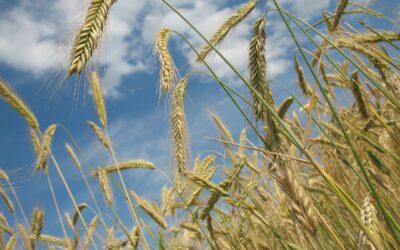 Pflanzenschutzmittel und Ökosystem