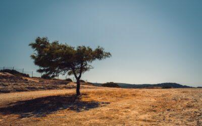 Wasserwiederverwendung: Die Lösung gegen Dürre?