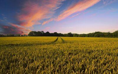 Landwirtschaft: Wasser sparen mit KI