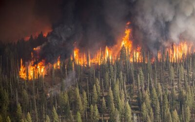 New report: Wildfire Impacts on Drinking Water