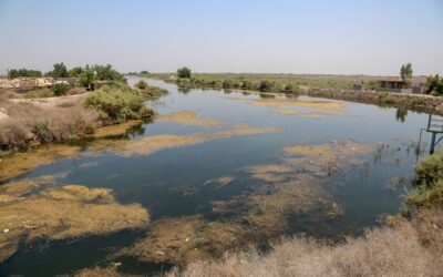 Iraq: Lack of water results in displacement