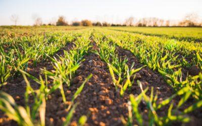 Landwirtschaft: Kurzschlüsse erhöhen Pestizidbelastung