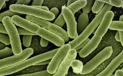 Using ATP in a Legionella Water Management Plan