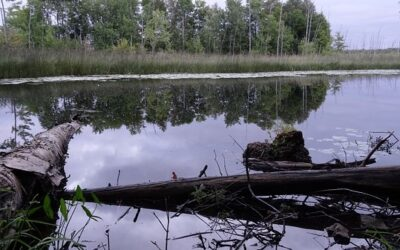 New study shows legacy of DDT in lake ecosystems in Canada