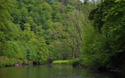 Wasserwirtschaftsjahr: Wupperverband zieht Bilanz