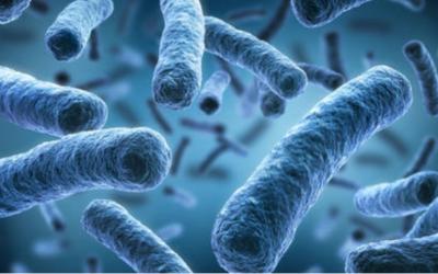 Legionellen-Erkrankungen in Bremen: Betreiber von Rückkühlanlagen zur Mithilfe aufgefordert
