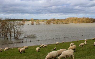 Hochwasser: Alarm- und Einsatzpläne aufstellen