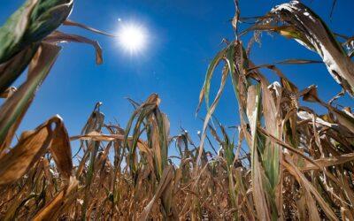 Konferenz zu den Auswirkungen von Dürren in Mitteldeutschland