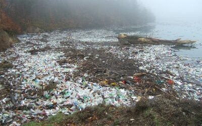 WHO calls for more research into microplastics