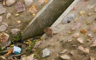 Anwender- und Entwicklungsworkshop zu Rattenköderschutzboxen