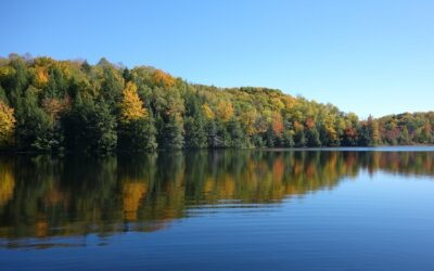 Eutrophication of lakes is shown by sediment microorganisms even decades later