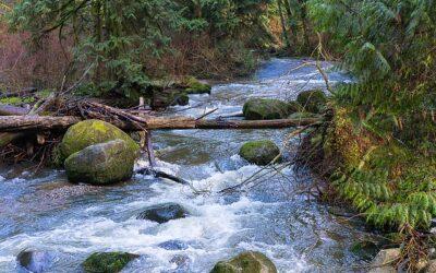 Gewässerschutz im Gespräch: Exklusives Experteninterview