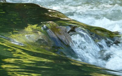 Jetzt schon vormerken: Zertifikatslehrgang Gewässerwart