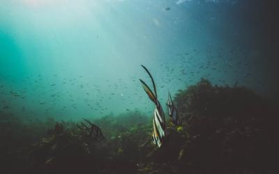 Studie: Trinkwasserreserven unter dem Meeresboden