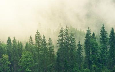 Nachhaltigkeit: Deutscher Erdüberlastungstag schon im Mai