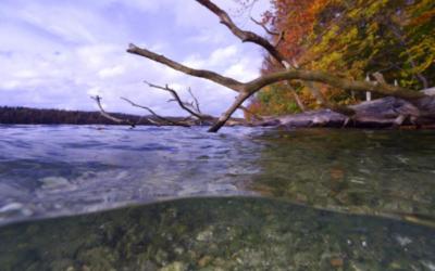 Weniger Sauerstoff in Seen gefährdet Artenvielfalt und Trinkwasserqualität