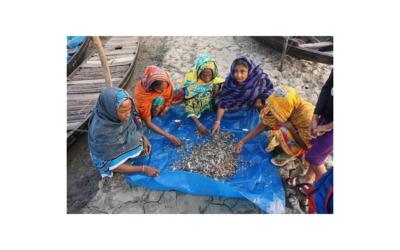 World Mangrove Day 2021: Wie nachhaltigere Garnelen zum Klimaschutz beitragen