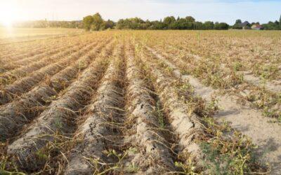 Mehr Niederschläge, extremere Dürren: Klimabericht der UN liegt vor