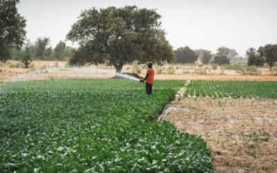 Projektförderung: Sauberes Trinkwasser in Afrika