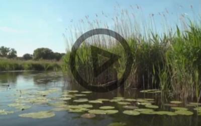 Umweltorganisationen aus Polen, Tschechien und Deutschland kritisieren Ausbaupläne für die Oder