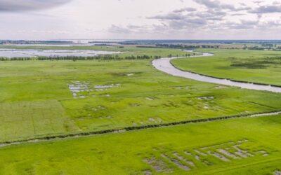 Neuartige Ökosysteme entstehen in wiedervernässten Mooren