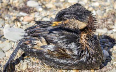 Ölpest verseucht Küste in Südkalifornien