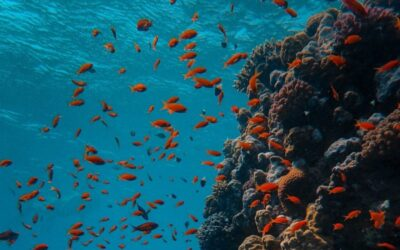 Restoring dying coral reefs: Coral Vita receives Earthshot Prize 2021